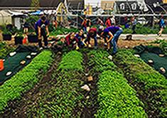 Scholars gardening
